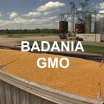 Badania GMO